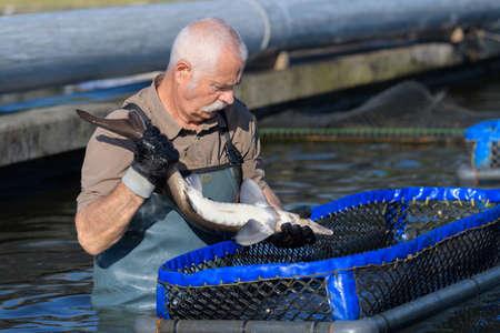 cichlidae: man working at a fish farm