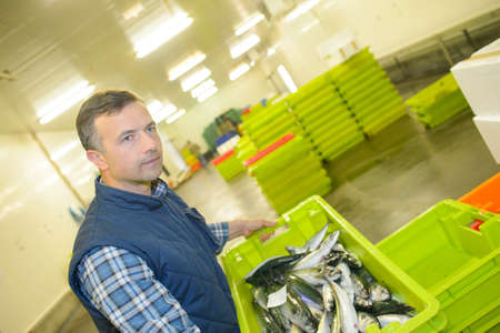 man lifting a crate full of fish Stock Photo