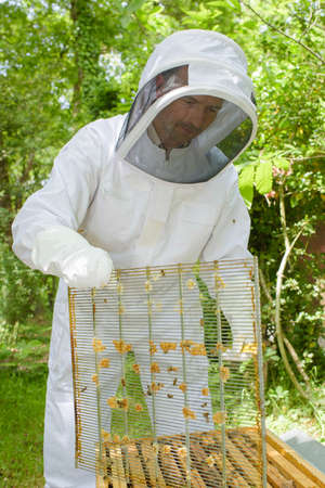 dismantle: Beekeeper opening hive