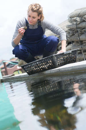 edible snail: woman catched oysters from fishfarm Stock Photo