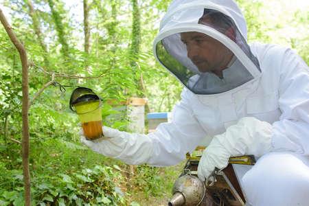 beekeeper inspecting the honey