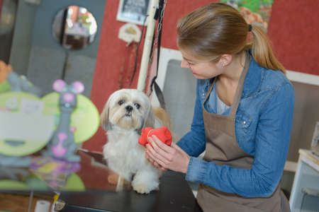 behave: in the pet salon