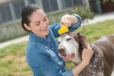 female vet stroking dog at animal shelter Stock Photo