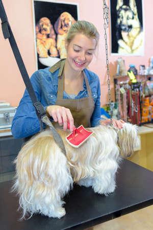 groomer: Pet groomer using brush Stock Photo