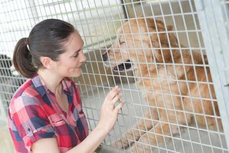 perro asustado: empleado de la perrera está comprobando el estado perros