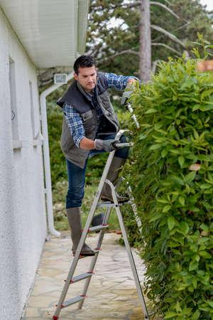 hedge: gardener on the hedge