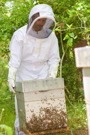 tending: Beekeeper tending hive swarming with bees Stock Photo