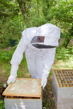 tends: Beekeeper attending hive Stock Photo
