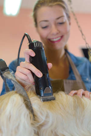clippers: Pet groomer using clippers
