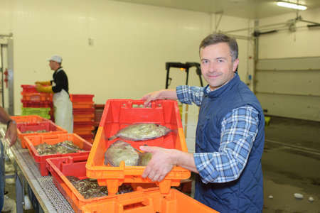 categorized: Worker showing fish in crate Stock Photo