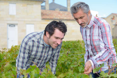 company person: Men inspecting leaves of grapevine