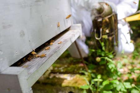 bees abandoning the hive Stock Photo