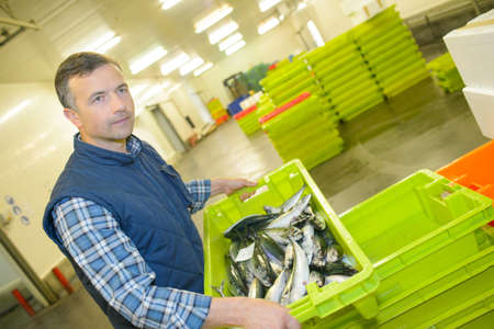 Worker holding container of fish Stock Photo