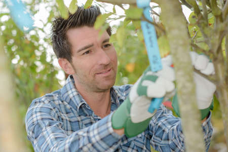 secateur: Gardener putting label on to tree
