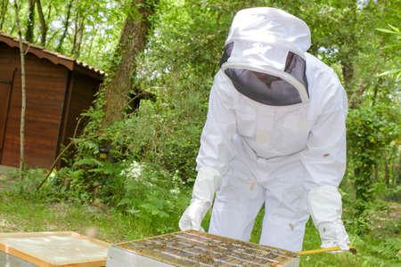 dismantle: Beekeeper working on hive