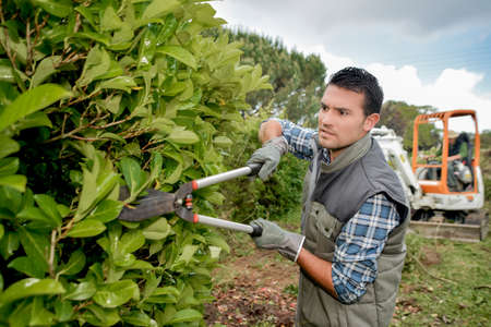 paysagiste: paysagiste haies