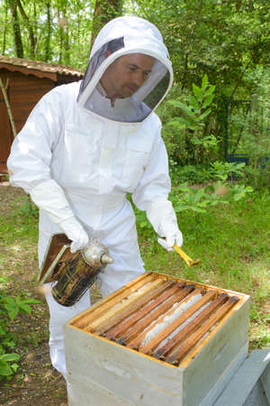 beekeeper smoking the hive Stock Photo