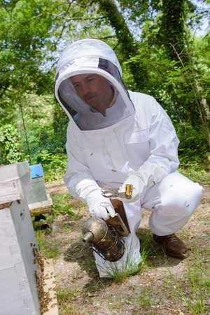 Beekeeper smoking hive