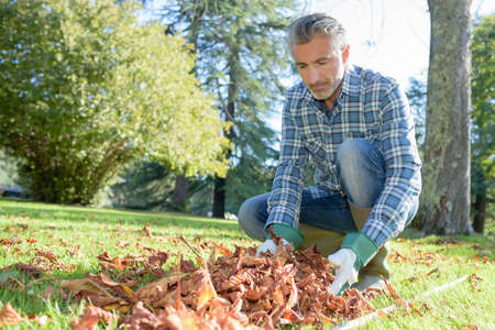 Gardener collecting dead leaves