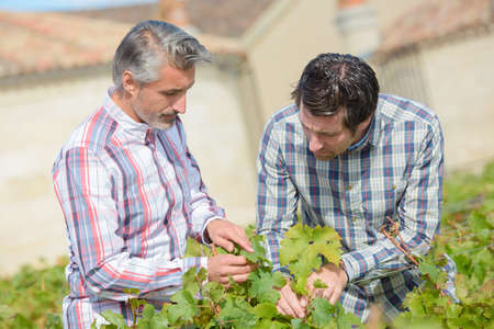 viticulturists inspecting the leaves