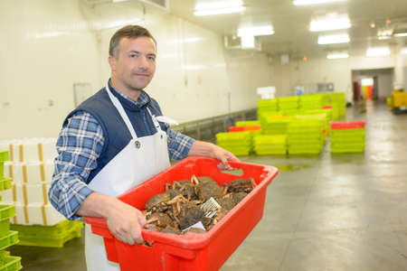 transporting a crab delivery Stock Photo