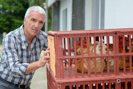 Mature farmer pushing crates of hens