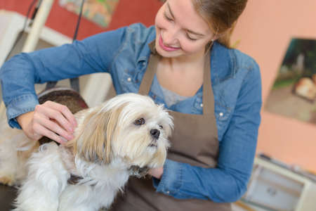 permanent wave: hairdresser for dogs Stock Photo