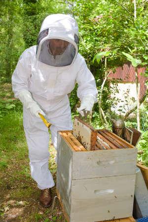 dismantle: Beekeeper tending hive