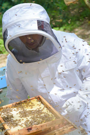 Man working on beehive Stock Photo