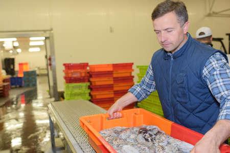 moving crate: Man lifting crate of shellfish