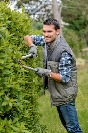 bush trimming: Man pruning hedge with shears Stock Photo