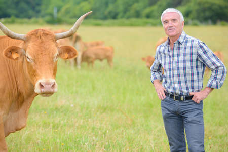 Portrait of farmer in field with cattle Stock Photo