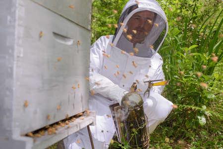 beekeeper smoking bees