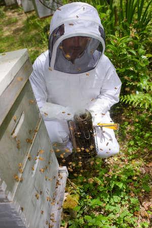 Beekeeper using smoker on hive