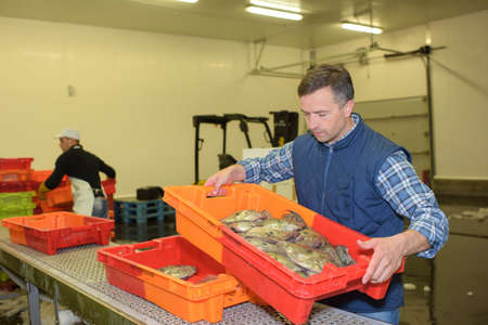 fishmonger: Fishmonger moving crate Stock Photo
