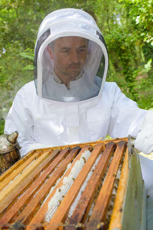 busy beekeeper holding a smoker Stock Photo