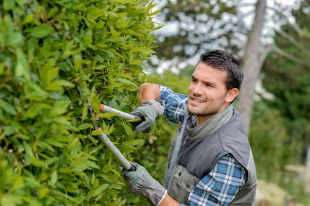 Man trimming side of hedge with shears Stock Photo