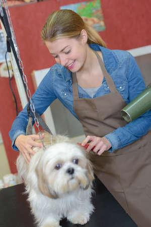groomer: Pet groomer brushing dog Stock Photo
