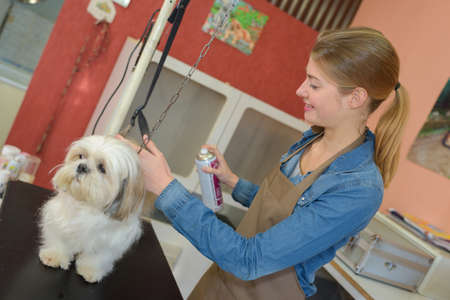 groomer: cute little dog at groomer salon