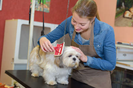 grooming: Woman grooming pet dog