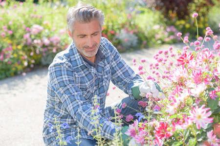beautification of the garden
