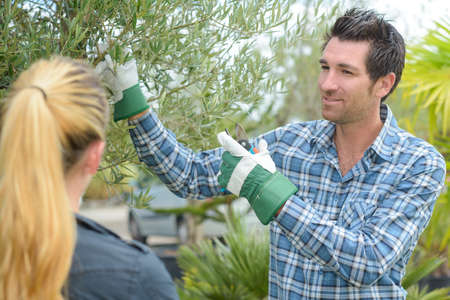 horticulturist: Horticulturist talking about plant