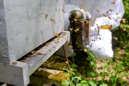 Closeup of beehive