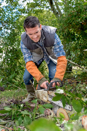 Using chainsaw to cut tree down Stock Photo