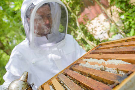 apiarist: Closeup of beekeeper working on hive