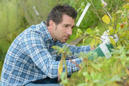 Man tending saplings Stock Photo