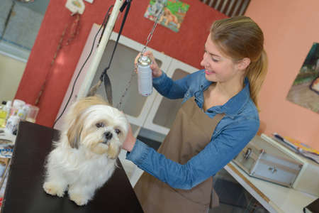 groomer: Pet groomer spraying dog
