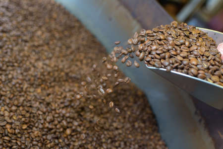 addictive drinking: checking coffee beans during roasting process at the factory Stock Photo