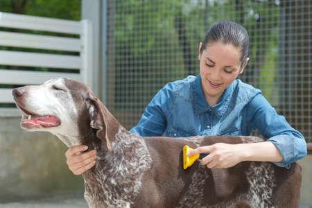 best shelter: female vet stroking dog at animal shelter Stock Photo