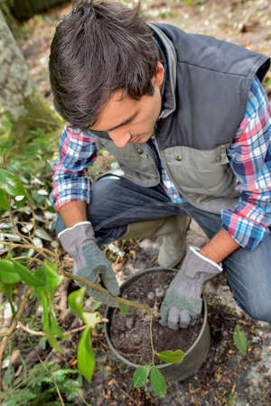 Gardener tending to a plant